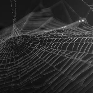 Weekly Research Briefing 09/30/19 image: Spider web